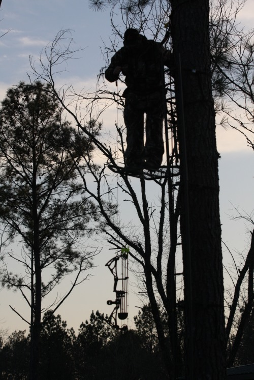 Always remember to wear a safety harness when using a tree stand and be sure all components on both are new or secure.