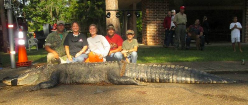 Stokes Alabama Alligator